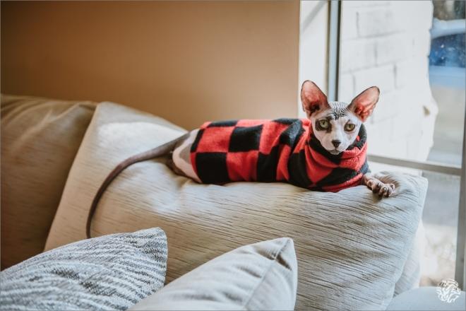 5958 - Yana's Photos - Dallas and Los Angeles Pet Photographer_.jpg